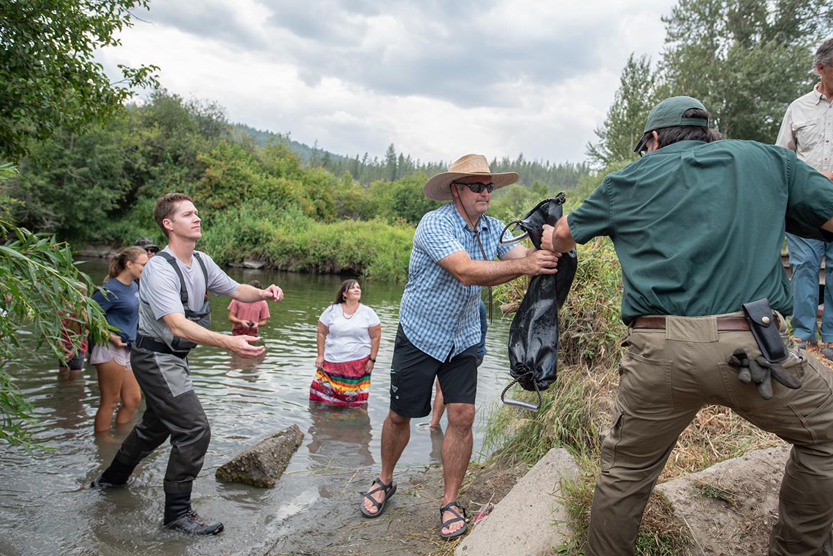 salmon release in little spokane river