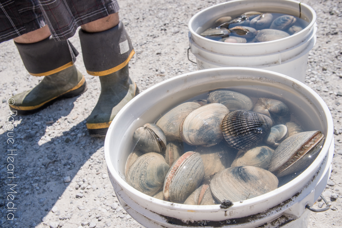 larrabee state park clams